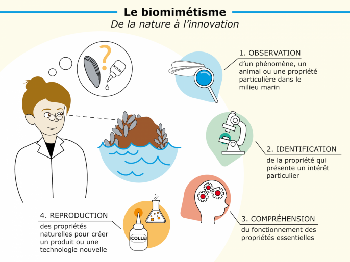 Infographie biomimetisme 01