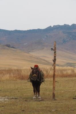 Photo voyage mongolie33