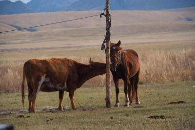 Photo voyage mongolie39